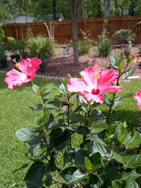 perrysflowers