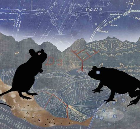 Cane Toad and Roof Rat (collage, 2014)
