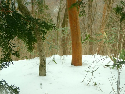 140222_snow_trees_400
