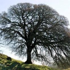 PersisKarim_tree