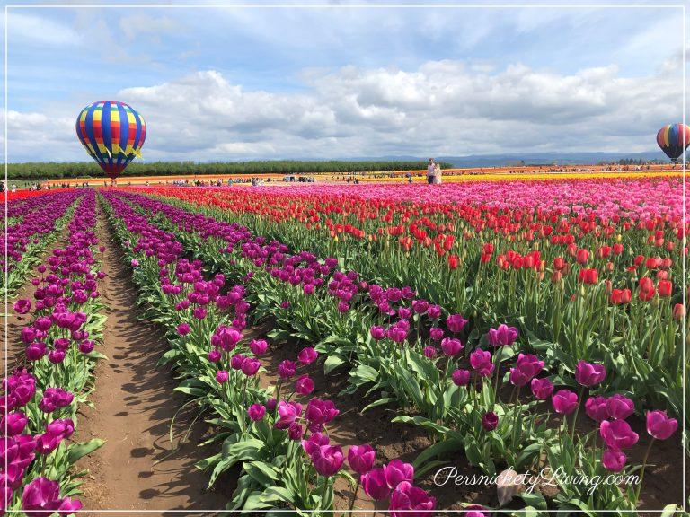 Tulip Fields and Balloons Portland Tulip Festival