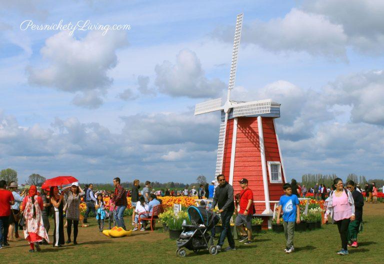 Windmill at Portland Tulip Festival