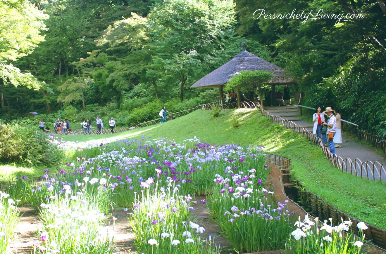 Iris garden Meiji Jingu Inner garden Tokyo from the top looking down