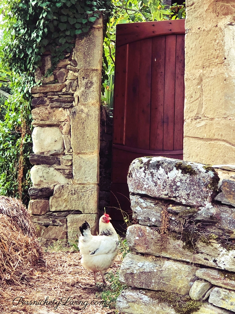 White Chicken in Najac