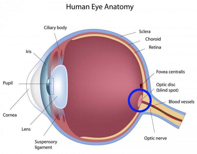 Image result for blind spots in vision