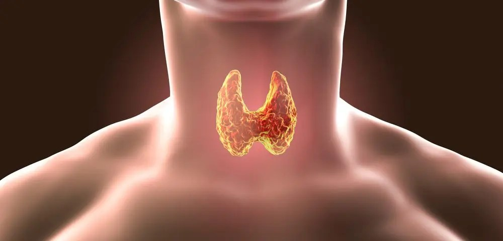 The Prevalence of Autoimmune Disease on the Thyroid | Wellness Clinic