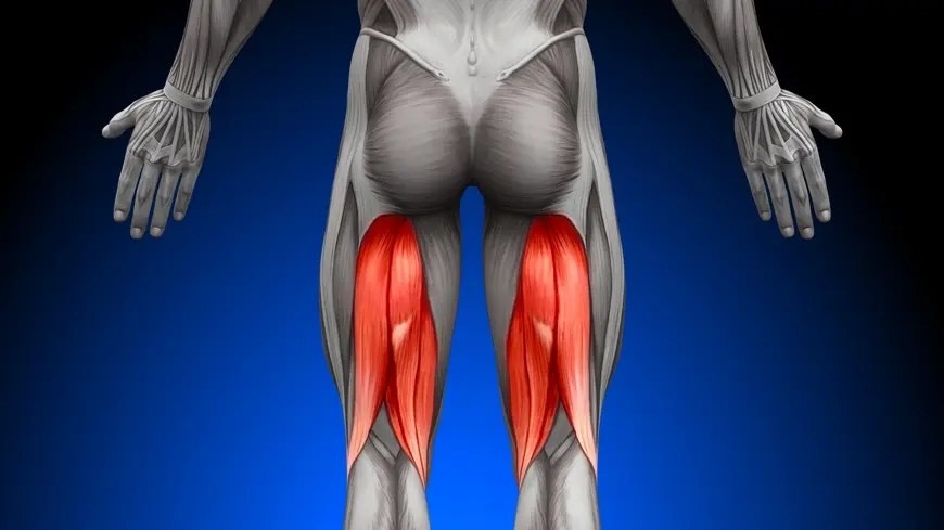 Assessment and Treatment of Hamstrings