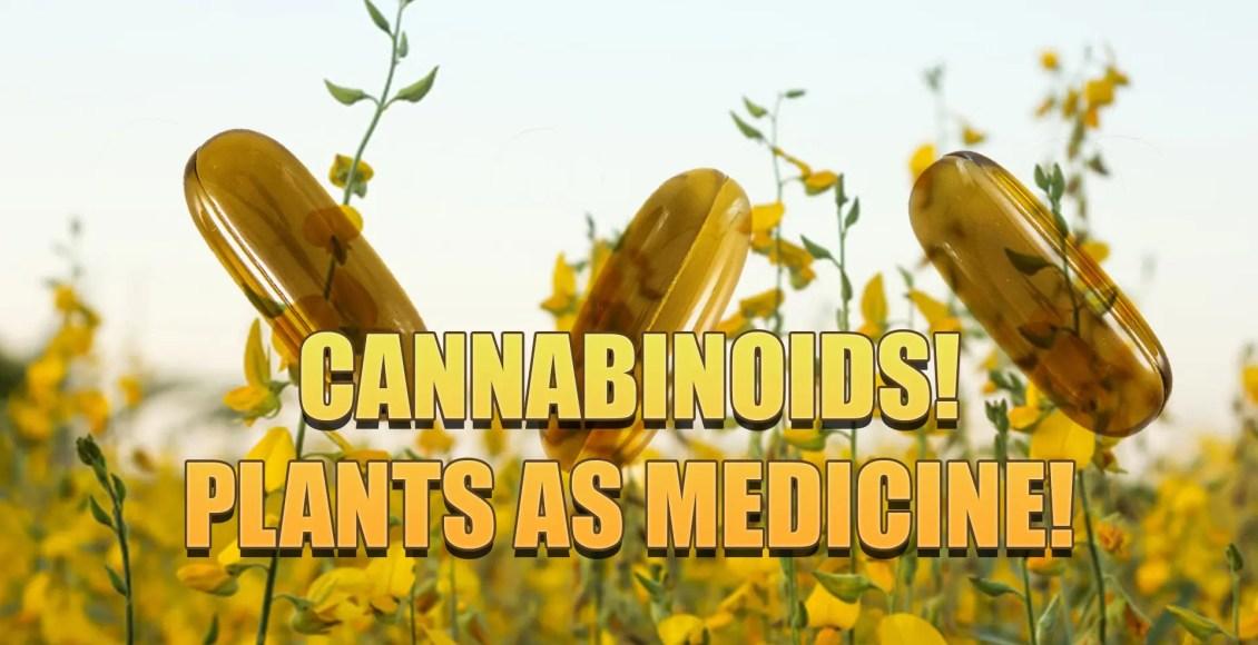 cannabinoids plant medicine el paso, tx.