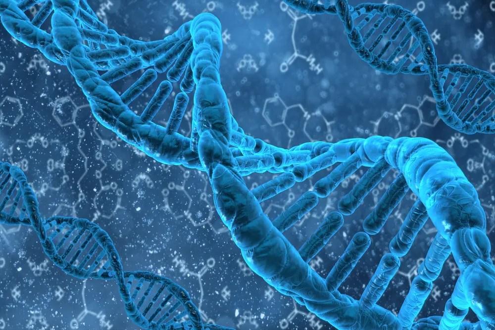Пластичность метилирования ДНК