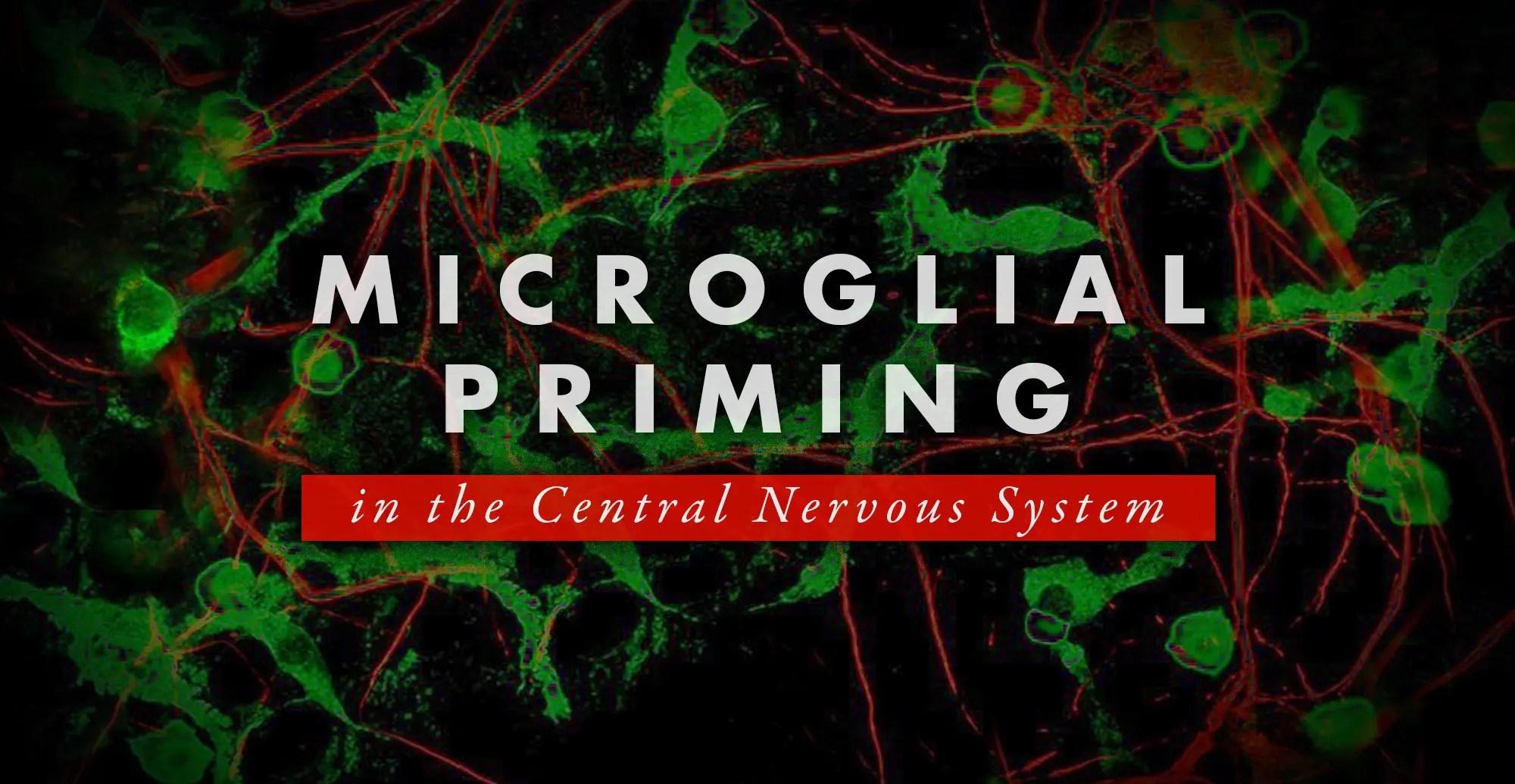 Cebado microglial en el sistema nervioso central