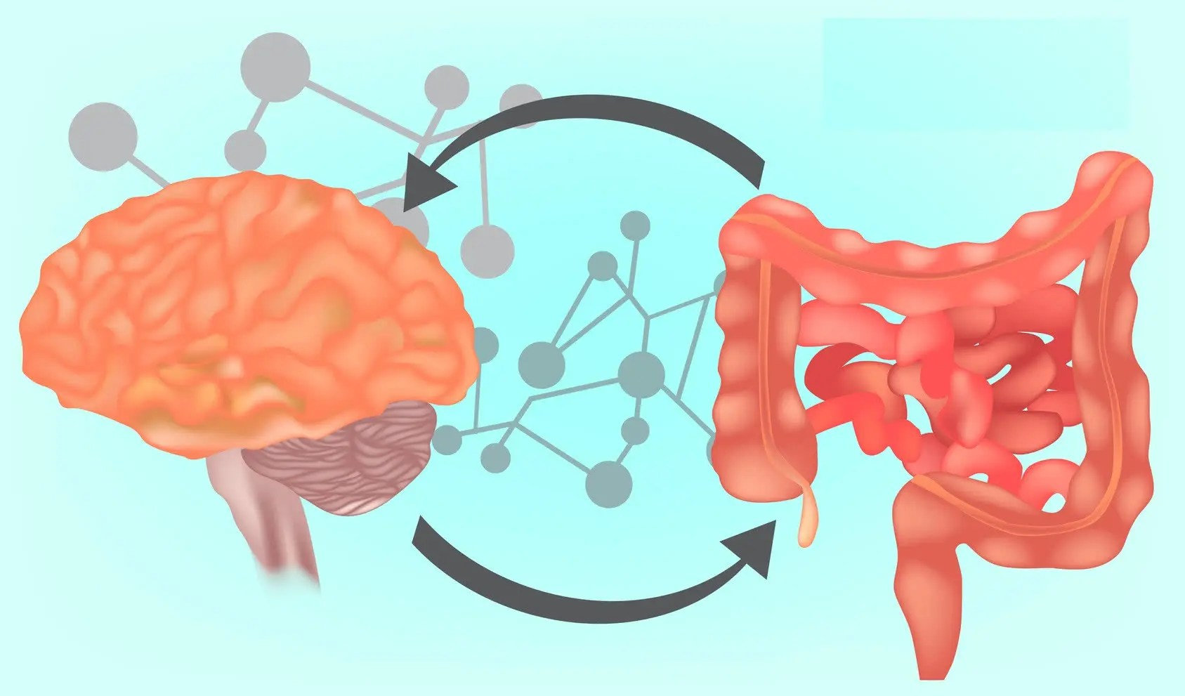 Functional Neurology: What is the Gut-Brain Axis?