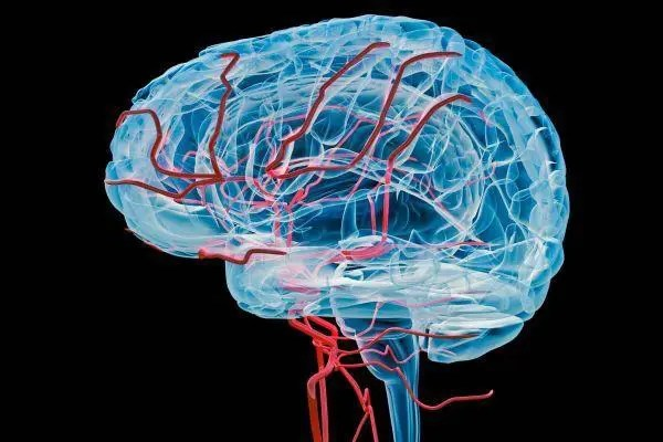 Functional Neurology: 8 Steps to Improve a Leaky Blood-Brain Barrier   El Paso, TX Chiropractor