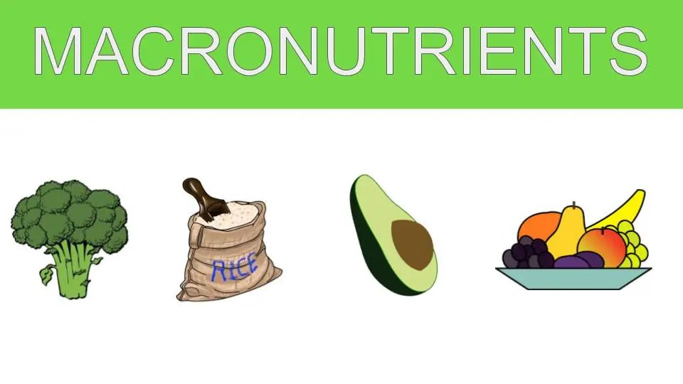 Macronutrients and Health