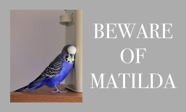 Beware Of ... Personalised Photo Doormat