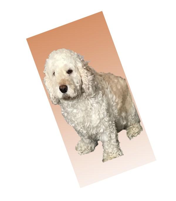 Personalised pet towels, Custom printed pet towels, Design your own towel, Design your own pet towel, Photo pet towels, Personalised dog towels, Personalised microfibre pet towel, Personalised microfibre dog towel, Bespoke printed towels, Personalised dog bath towel