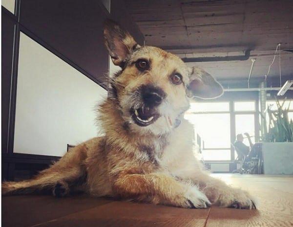 Gelebte Work Love Balance - Auch Hunde am Arbeitsplatz sind bei Comspace gern gesehen