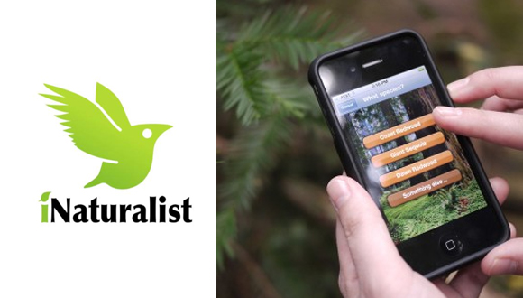 Use the iNaturalist app to get your Personal Trainer Food steps in; it's fun and easy to lose weight this way!