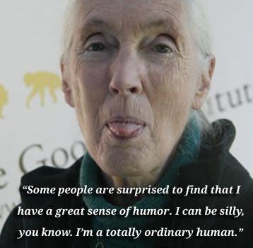 Vídeo de liberación de un chimpancé inteligente. Jane Goodall