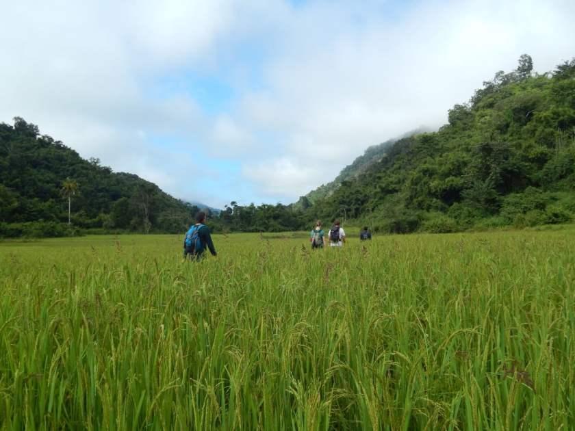 Perché andare in Laos? C'è anche il trekking nella giungla, per esempio