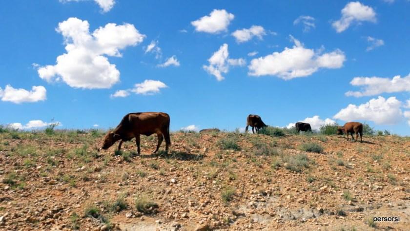 paesaggio della Namibia