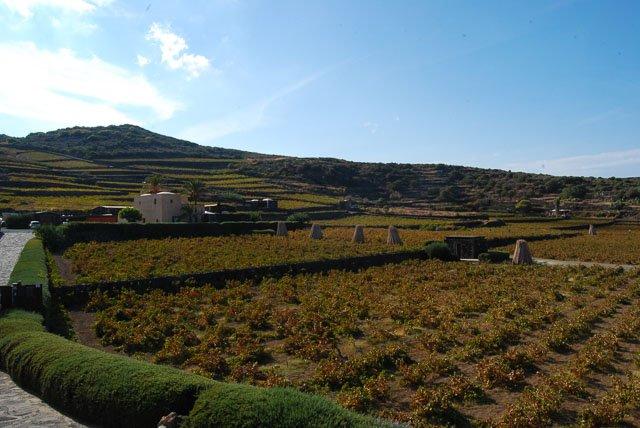 Cantine di Pantelleria: Donnafugata