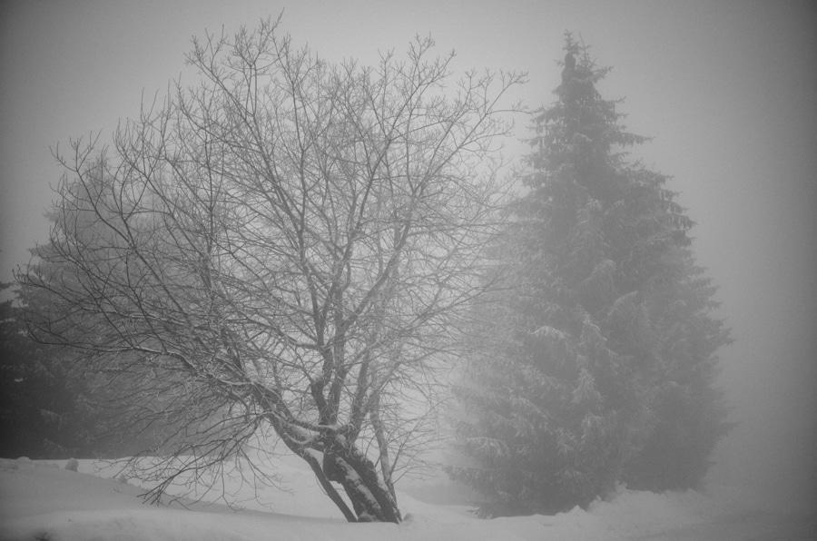 Nostalgie de l'hiver