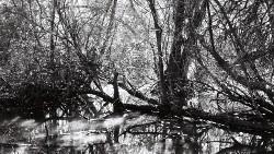 Woods & Waters