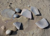 Collection of broken, oval lower and roundish upper grinding stones at the early-middle Holocene occupation site by Umm el-Dabadib in Kharga. Scale is 15 cm long. Photo: Per Storemyr.