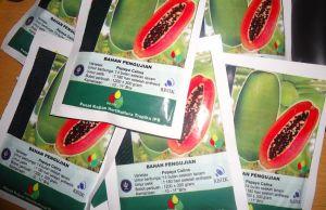 Jual benih pepaya Calina/IPB-9