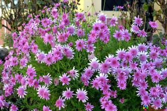 Flores que adornan el Centro Educativo de la Merced.