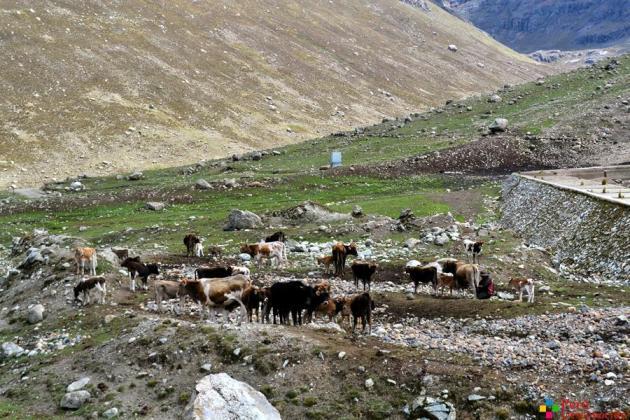 Piscigranja cercana a la Laguna de Qharán