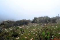 Espesa neblina al llegar al Cerro Quillayoc