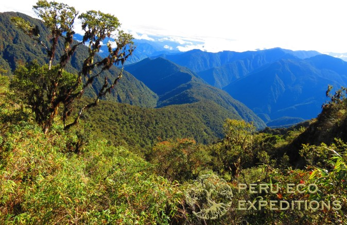 Manu National Park Expedition - Peru Eco Expeditions