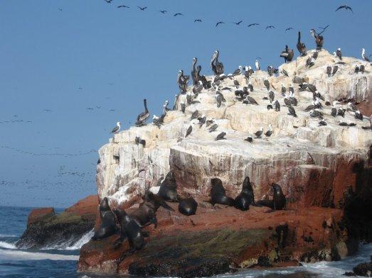Aves y focas