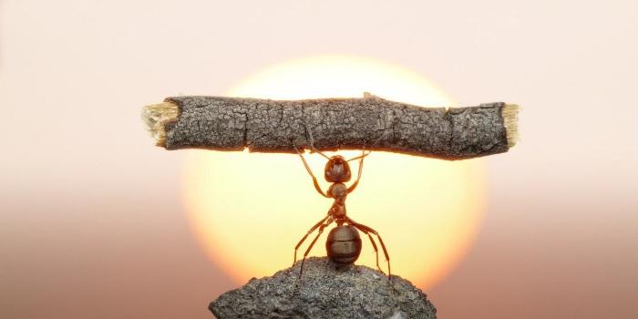 Сколько муравей может поднять больше своего веса. Сколько весит муравей и какую массу он может поднять