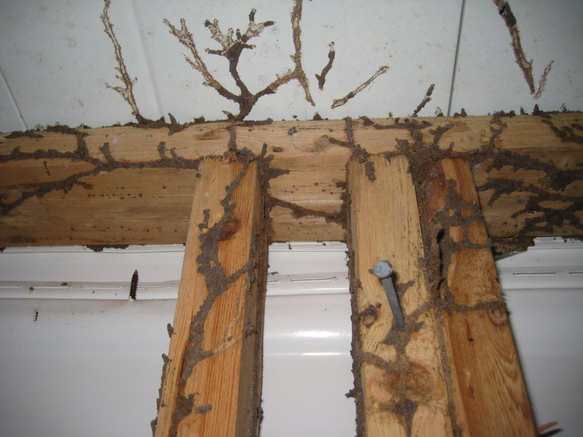 Image Result For Fence Repair Near Me