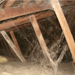 What Pest Treatments Work In An Attic?