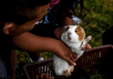 Best Pet Insurance for Rodents