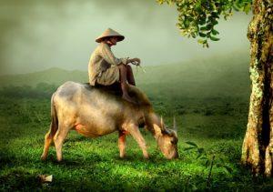 Farm Insurance: Complete Guide to Farm Insurance Policy