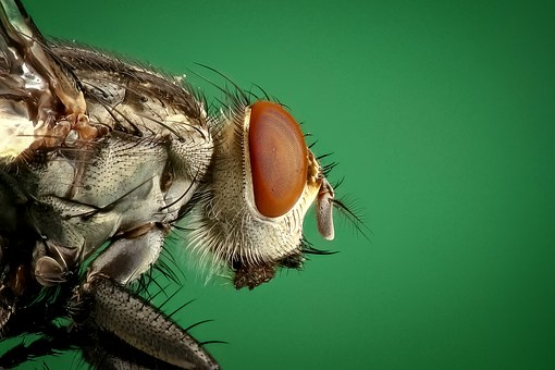 How to eliminate houseflies from home