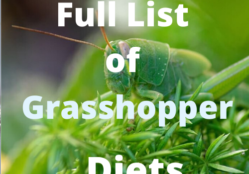 What Do Grasshoppers Eat? Discover Their Diet