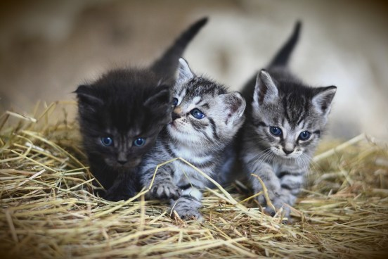 Bringing home a kitten