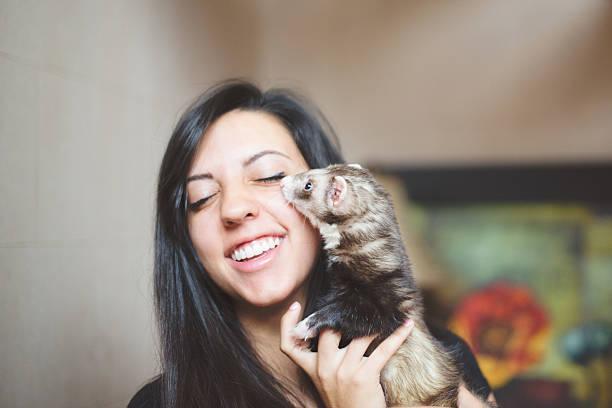 Ferret as pets