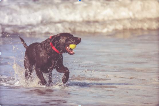 Best Dog Breeds for Spring