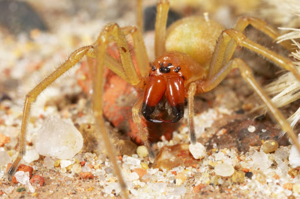 How to get rid of yellow sac spider
