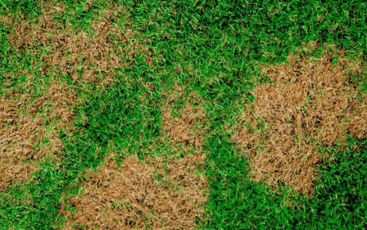 How to Prevent Fungus and Disease on your Lawn