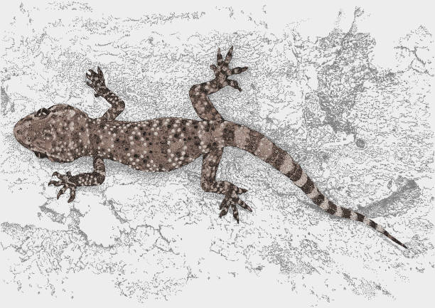 How to get rid of lizards and geckos