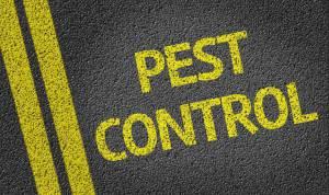 How to choose a pest control company?