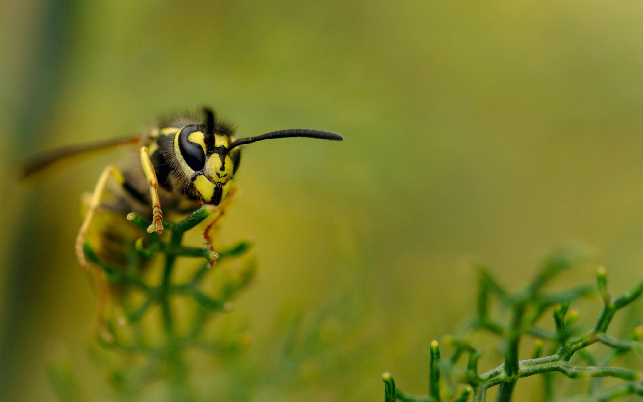 Are wasps affected by Climate Change?
