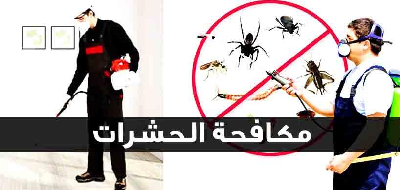 شركة مكافحة حشرات في القاهرة الجديدة